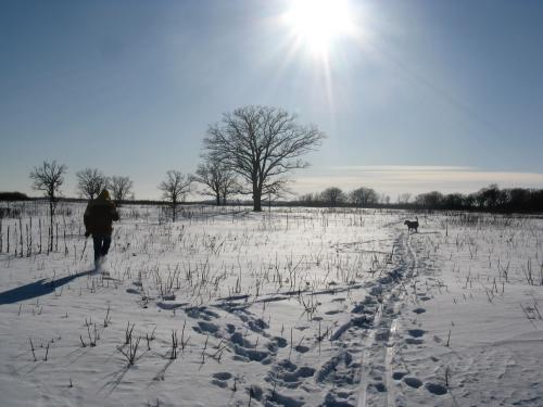 Cleo and I approach the mighty oak on the savanna in winter
