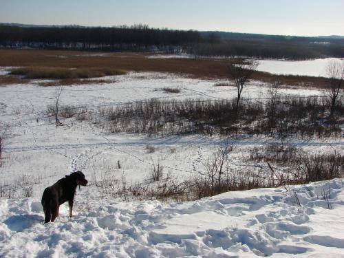 Cleo beholds the frozen Louisville Swamp / Minnesota River Valley