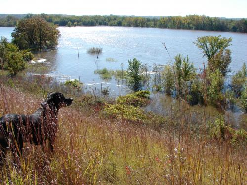 Cleo beholds the flooded Louisville Swamp / Minnesota River Valley